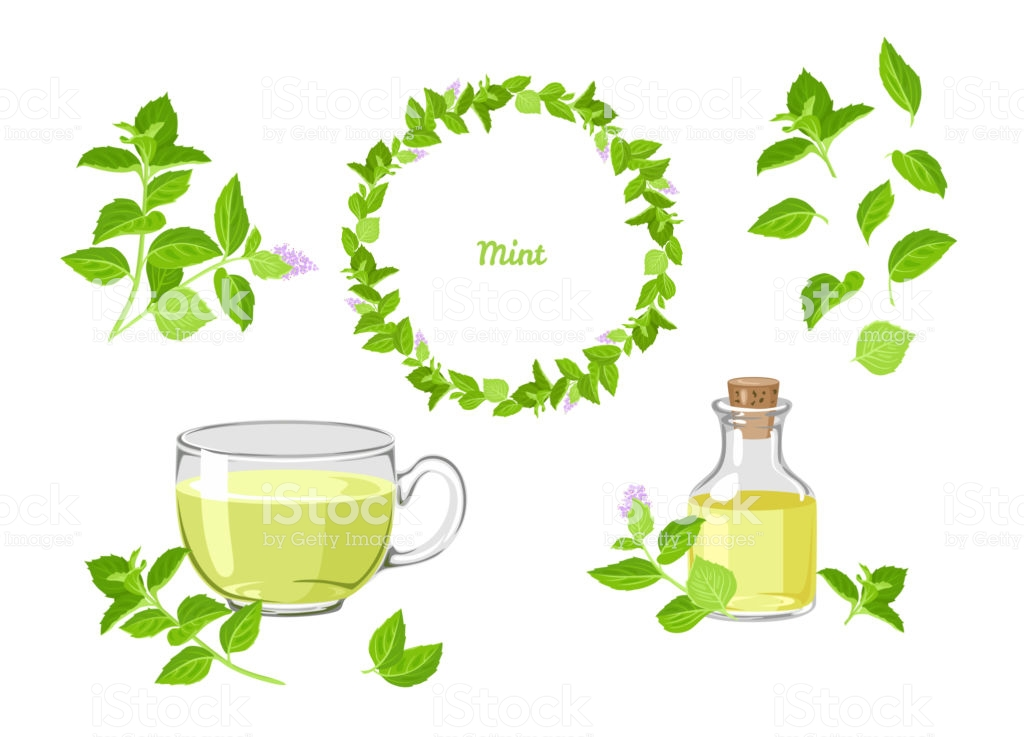 peppermint tea and oil